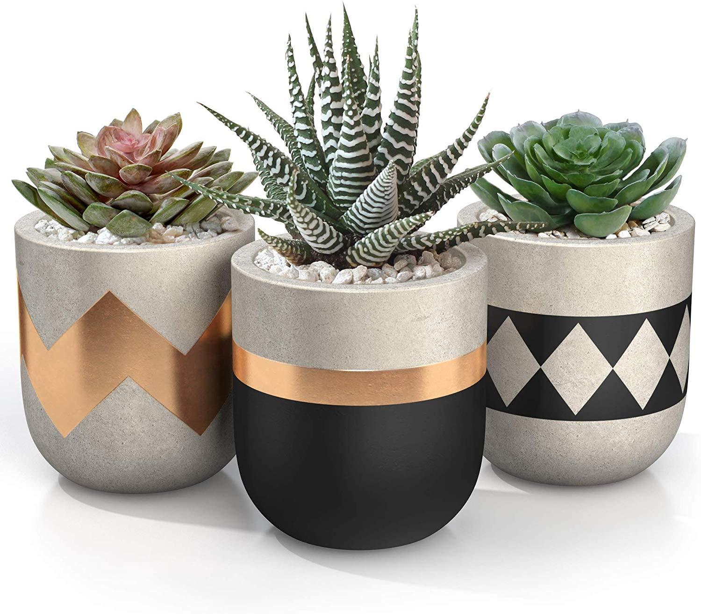 hostess gift ideas succulent pots
