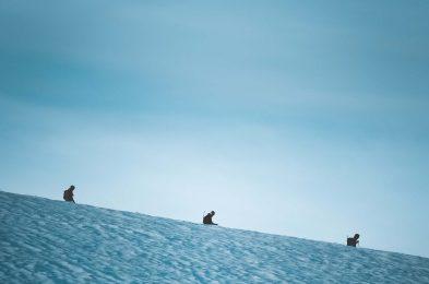 adventure-cold-daylight-2892590