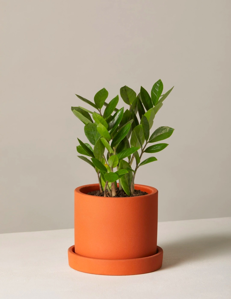 best plant for home office