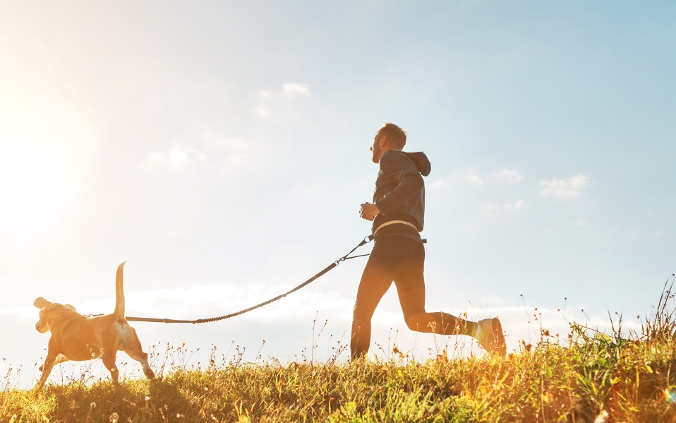 best running leashes for dogs