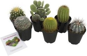 best indoor plants altman plants
