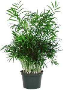 best indoor plants american plant exchange