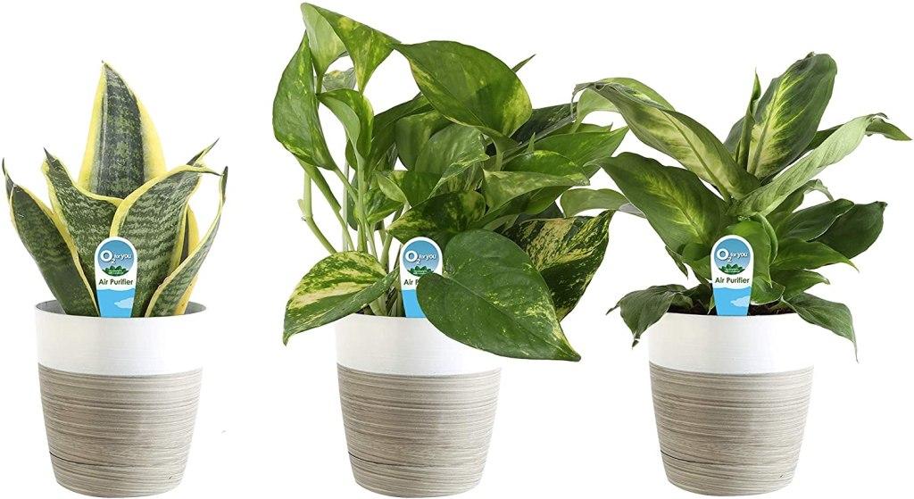 best indoor plants costa farms
