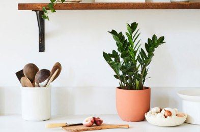 Here Are the Best Places to Order Indoor Plants Online