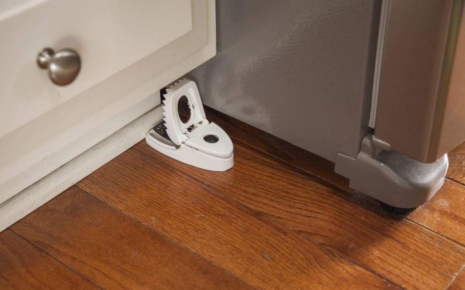 best mouse traps amazon