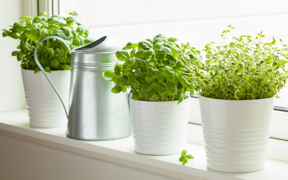 best ways to grow your own