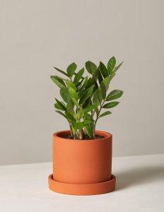 order plants online / best indoor plants zz plant