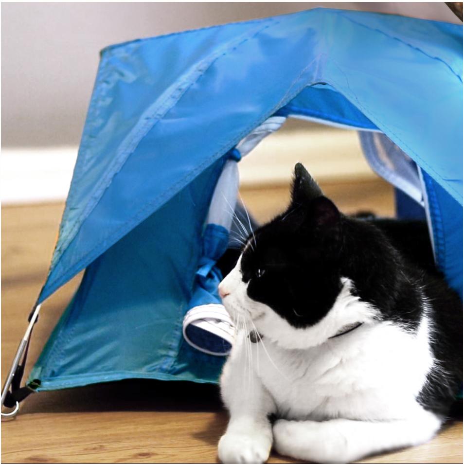 Tiny Tents 3