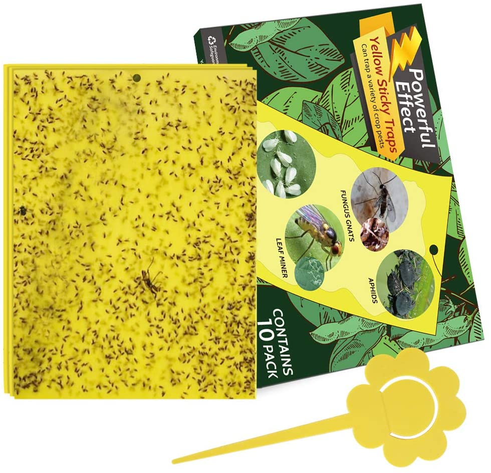 Kensizer 10-Pack Yellow Sticky Gnat Traps