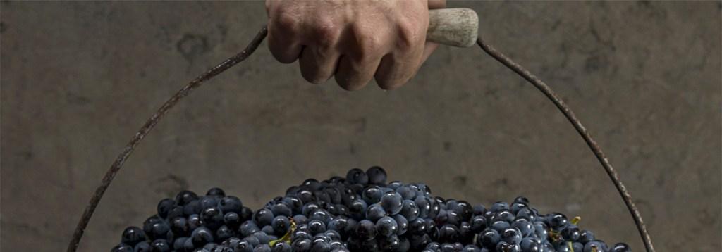 biodynamic wine louis roederer