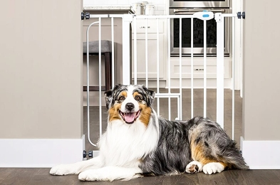 Pet-Safety-Gate-Featured-Image