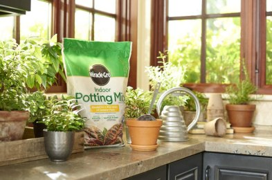 the best potting soils for beautiful containers this year