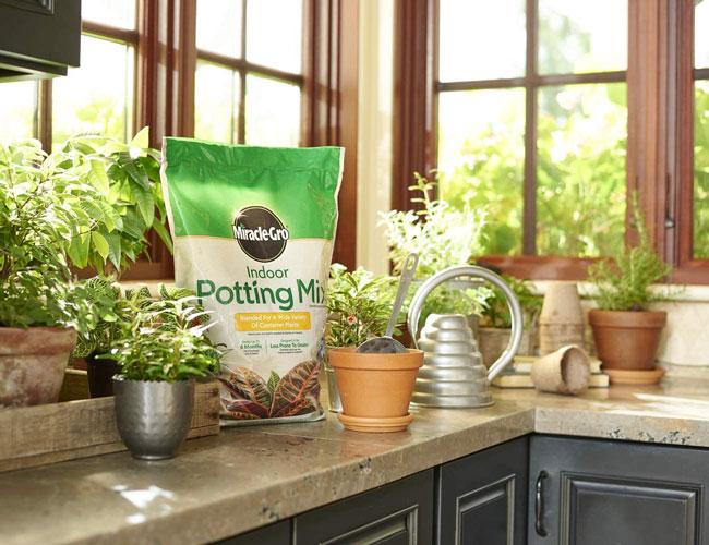 best potting soil