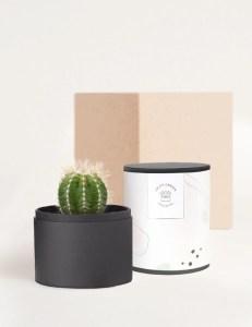 noir cacti arrangement, flower delivery services