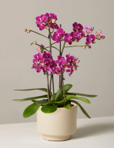 purple orchid, flower delivery services