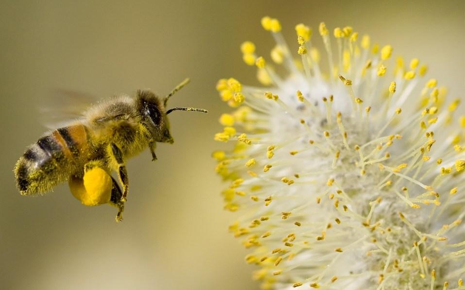 best bee pollen supplements