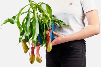 buy-carnivorous-plants-online
