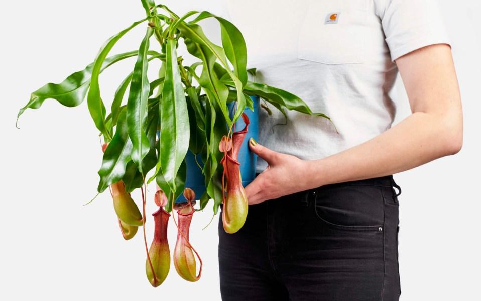 buy carnivorous plants online