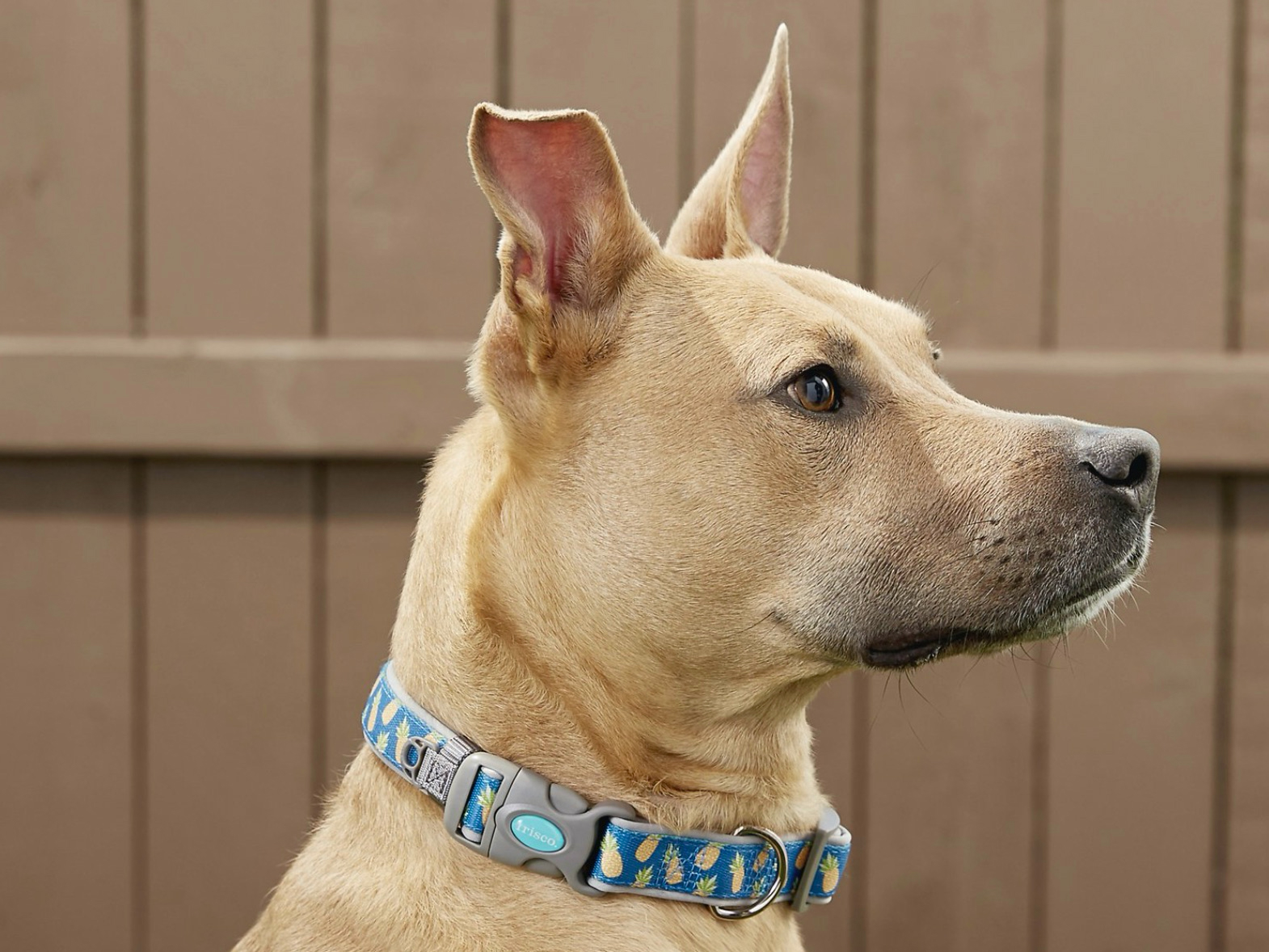Strut Your Mutt With These Cute Dog Collars Spy
