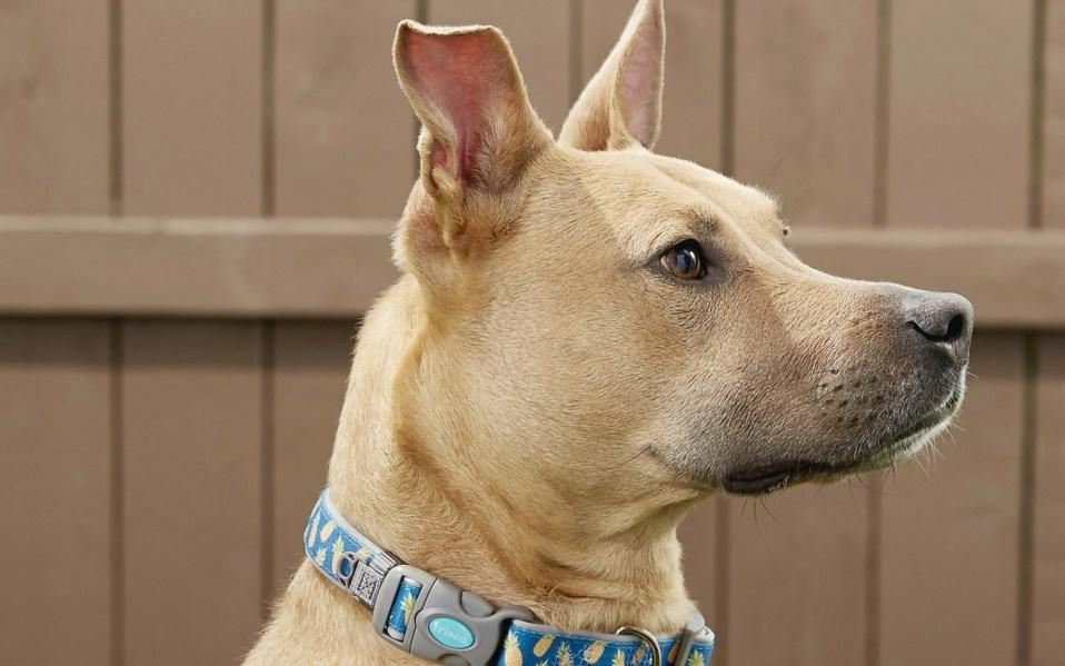 Cute Dog collars