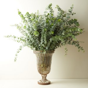 Fresh Eucalyptus bunch, flower delivery services