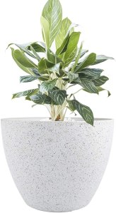 large indoor pot planter, how to take care of plants