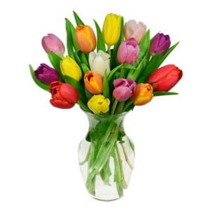 15 rainbow tulips bouquet, flower delivery services