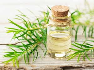 tea tree oil sanitizer, benefits of tea tree oil