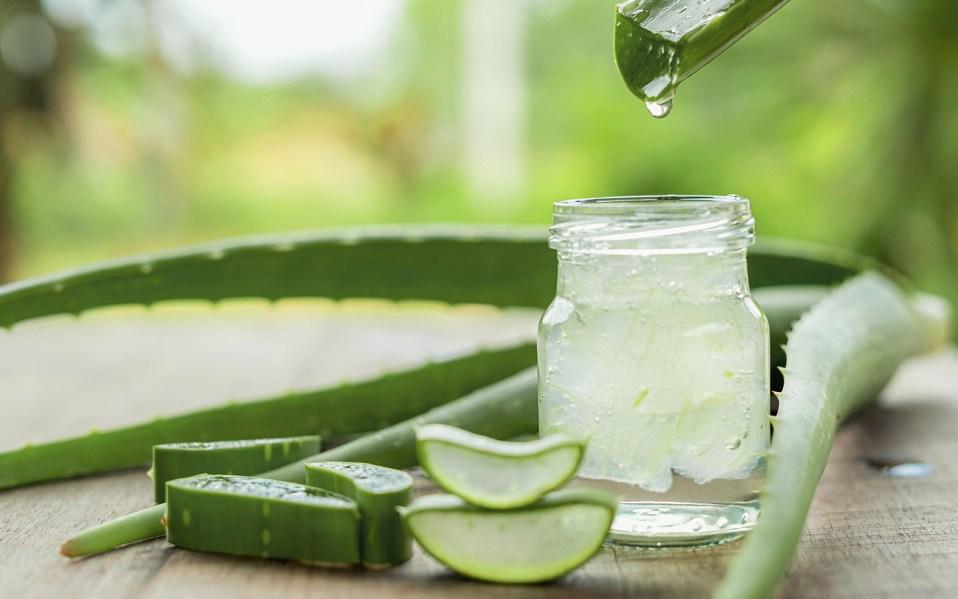 benefits of aloe vera, benefits of