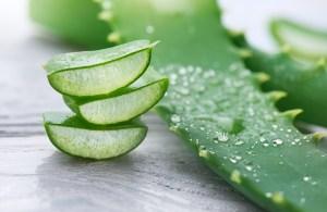 benefits of aloe vera, aloe vera benefits
