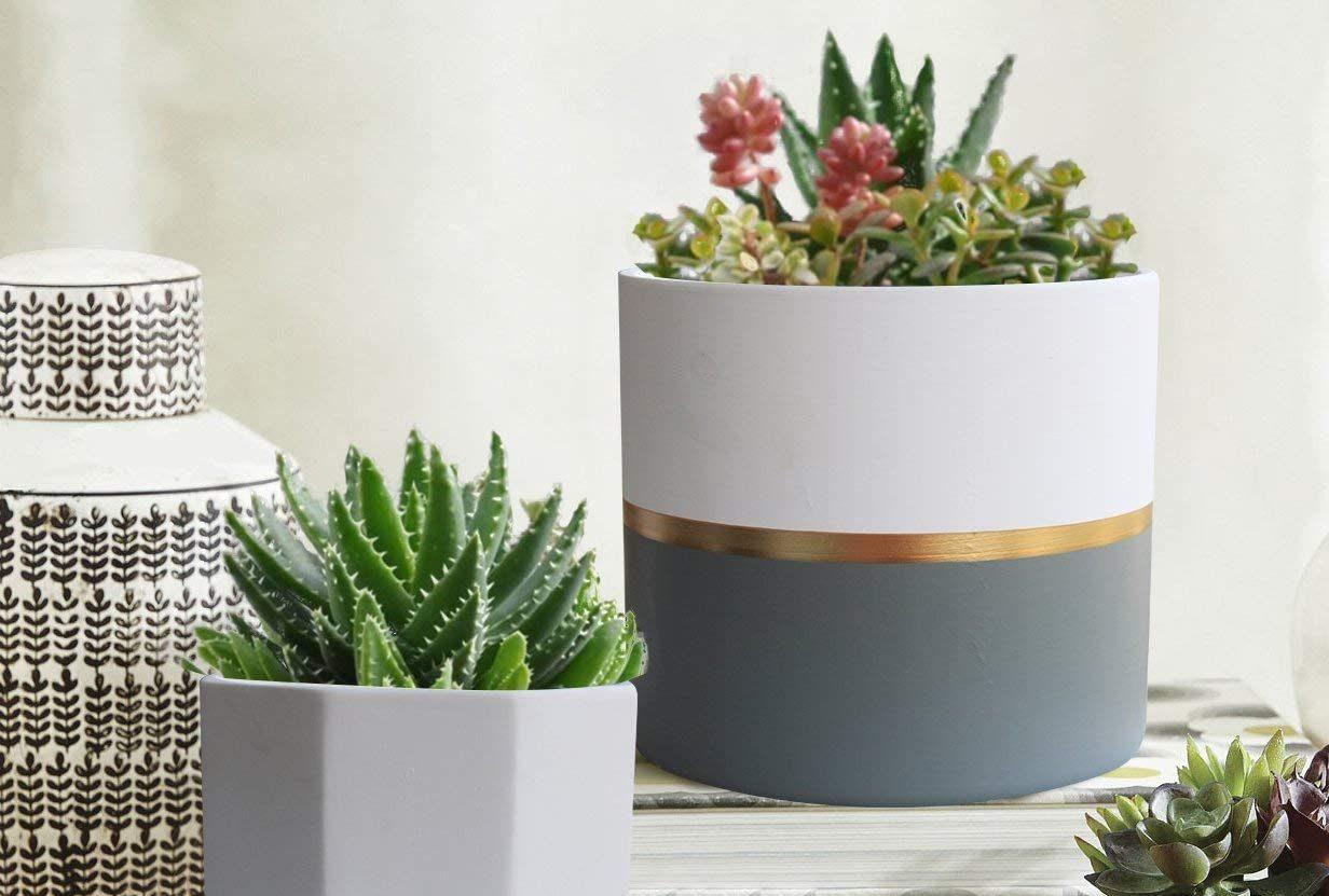 The Best Ceramic Pot Plants To Buy In 2020 Spy