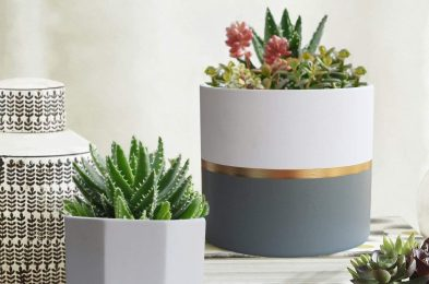 Ceramic-Potted-Plant