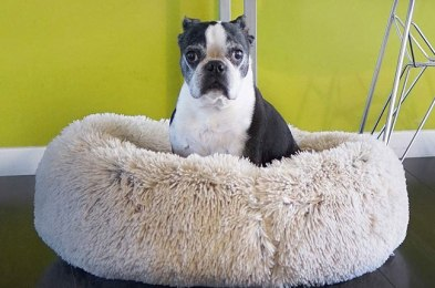 your dog will love you forever after you buy him one of the best dog beds on amazon
