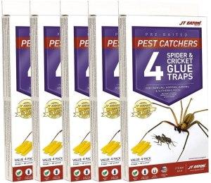 J T eaton spider glue traps, spider catcher, best spider catcher