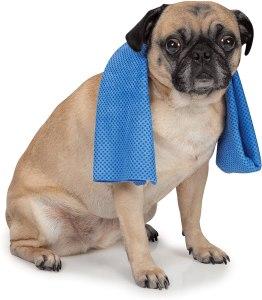 dog cooling towel, best cooling towels