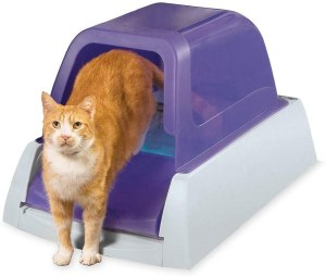 self-cleaning litter box, cat litter boxes, best litter box