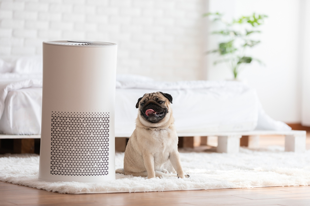image of a dog sitting next to hepa air purifier