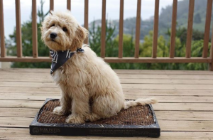 Bark Potty pad, gifts for dog lovers
