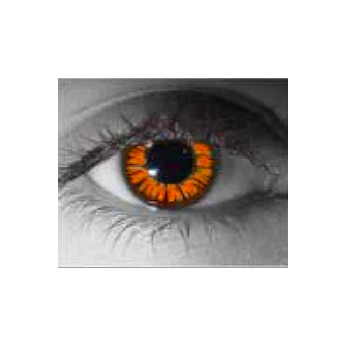 Lens.com Golden Twilight (Eclipse) Contact Lenses