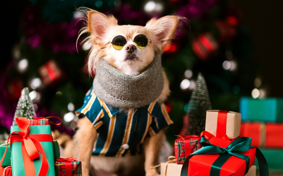 gifts for dog lovers, best gifts