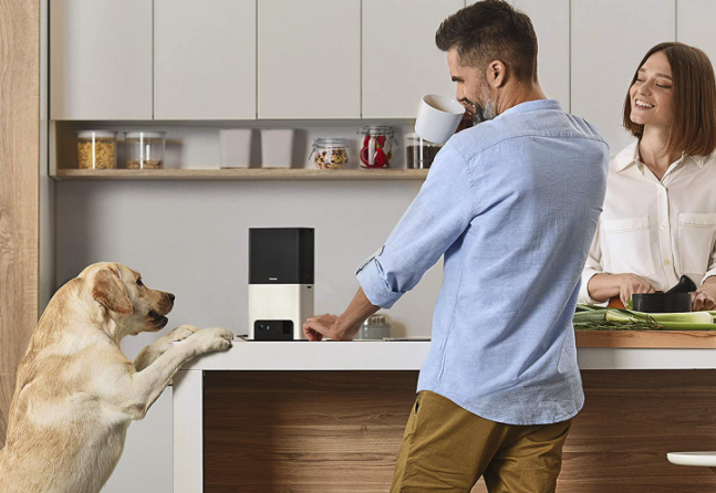 The Best Pet Camera For Sale In 2020 Spy