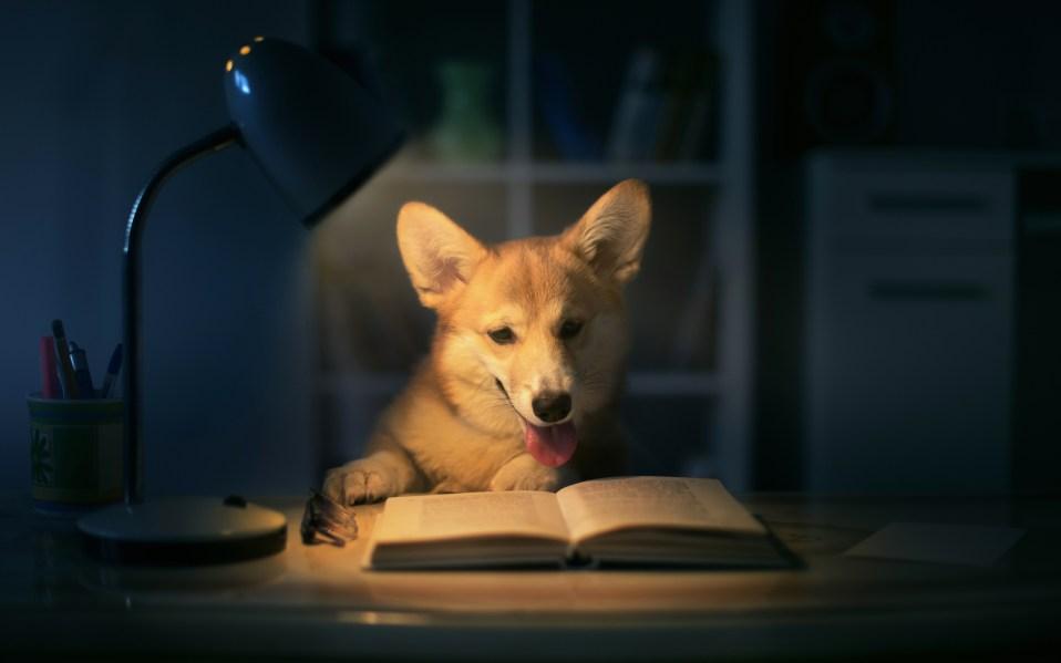 best reading lamps
