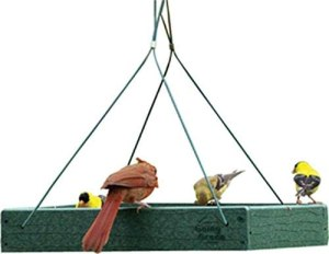 best bird feeders audubon