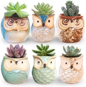 best gifts for coworkers: Rose Create Little Ceramic Succulent Owl Pots