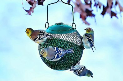 this winter, make some new feathered friends with one of the best bird feeders.