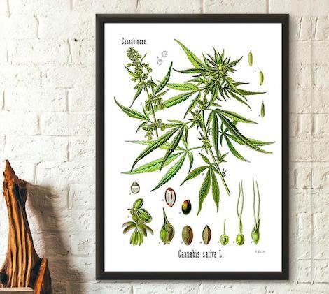 stoner gifts: Botanical Cannabis Plant Print