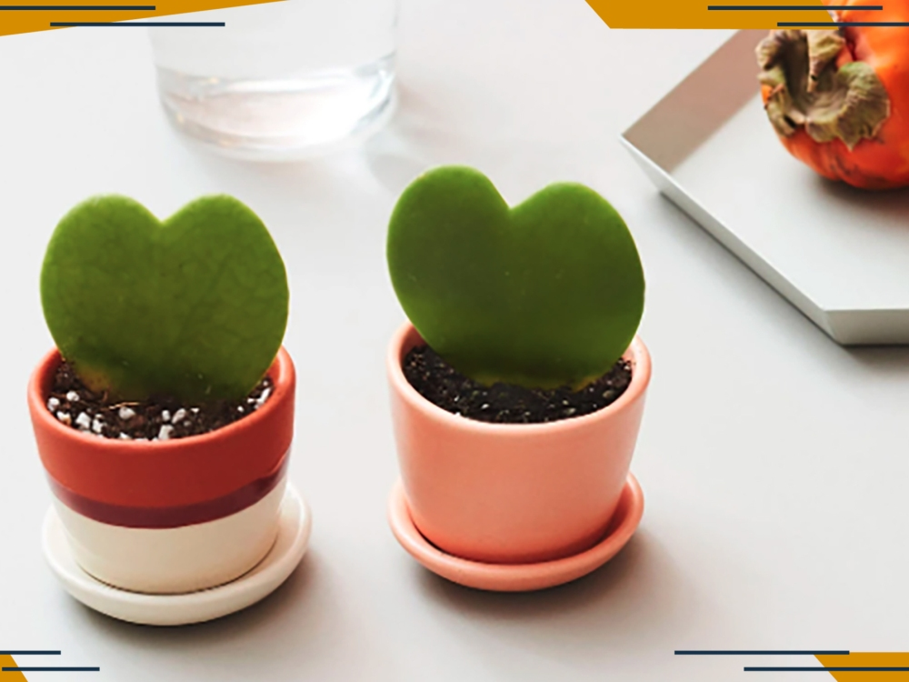 These Adorable Mini Heart-Shaped Succulents Are the Perfect Valentine's Day Gifts for 2021