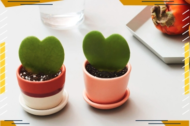 the-sill-heart-plant-FI