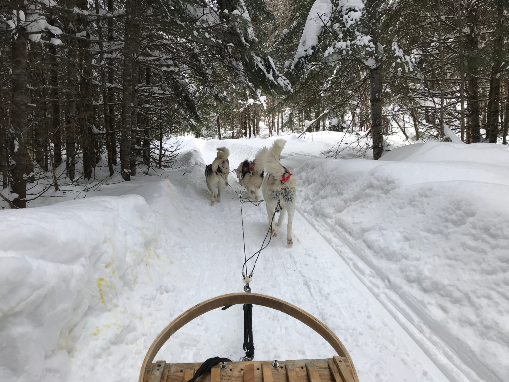 dog sledding in quebec