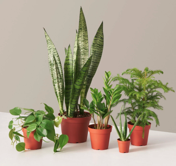 the sill plant parent set, gifts for wife